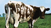 AtomHeartMother_Floyd_cow.jpg