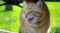 scared-cat-featured-image.jpg