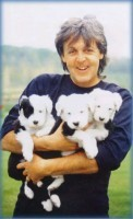 PAUL-MCPUPPIES-The-Puppy-Master-Master-of-Puppies-JPM-Puppymaster-etc.-etc..jpg